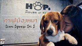 คาเฟ่หมา สยาม HoPs Dog Cafe แก๊งค์สี่ขาสุดกวน ชวนหลงรัก
