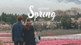 โรแมนติก ที่ ญี่ปุ่น กับ 6 ดอกไม้สวย บานต้อนรับฤดูใบไม้ผลิ
