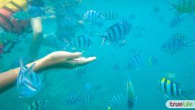 ดำน้ำ อย่างถูกวิธี รู้ไว้ไม่ทำลายปะการัง (ดำน้ำลึก)