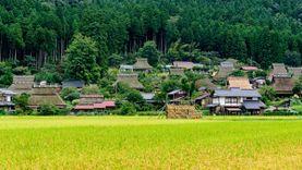 ญี่ปุ่น เตรียมดันการท่องเที่ยวแบบ ฟาร์มสเตย์ ทั่วประเทศ ให้นักท่องเที่ยวสัมผัสวิถีแท้ๆ แบบชาวญี่ปุ่น