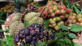 ททท.กาญจนบุรี ชวนไปชิมผลไม้ ในงานวันผลไม้ของดีอำเภอทองผาภูมิ