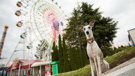 พาหมาไปเที่ยว สวนสนุก Fuji-Q Highland ที่ญี่ปุ่นได้แล้ว! คิดค่าเข้าเท่าตั๋วเด็ก