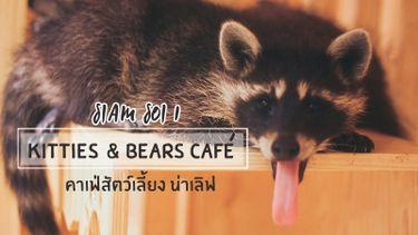Kitties & Bears Cafe สยาม ซอย 1 คาเฟ่สัตว์เลี้ยง ที่ใหญ่ทีสุดในกรุงเทพฯ