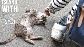 เที่ยวญี่ปุ่น บุก เกาะแมว Tashiro Island พร้อมพิกัด การเดินทาง ทาสแมว ต้องหลงรัก !