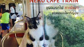 ทาสทั้งหลายโปรดทราบ! เปิดตัว รถไฟ คาเฟ่แมว แห่งแรกของโลกที่ญี่ปุ่น