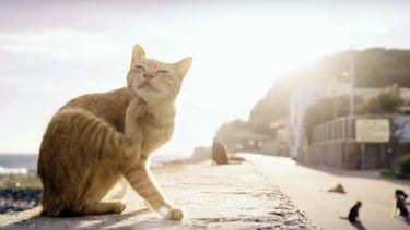 แฟนคลับญี่ปุ่น ทำคลิป เกาะแมว ชวน Ed Sheeran ไปเที่ยว มีความอ้อนขั้นสุด!