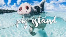 อย่างนี้ก็ได้เหรอ ! มา Bahams ที่ เกาะหมู ว่ายน้ำกับ หมูทะเล ที่นี่หมูครองโลก ! (มีคลิป)