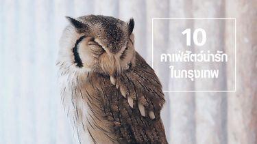 10 คาเฟ่สัตว์น่ารัก สุดมุ้งมิ้ง ที่ต้องไป ในกรุงเทพ