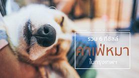 6 คาเฟ่หมา ในกรุงเทพฯ ร้านกาแฟ สุดน่ารัก กอดน้องหมาแสนซนกัน !