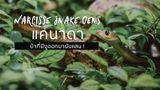 ป่าที่มีงูออกมา! Narcisse Snake Dens แคนาดา ยั้วเยี้ยนับแสนตากแดดในแดนสวรรค์