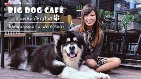 Big Dog Café คาเฟ่หมาใหญ่ ใจดี ไปกอดน้องหมา น่าฟัด ที่ รัชดา