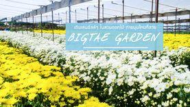 สวนดอกไม้ บิ๊กเต้ สระบุรี ที่เที่ยวใกล้กรุงเทพ เดินเล่นชมดอกไม้ชิลล์ๆ ถ่ายรูปมุมไหนก็สวย