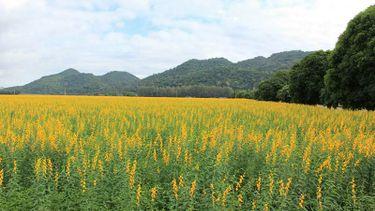 ททท.สำนักงานนครราชสีมา ชวนเที่ยวงาน เกษตรแฟร์ปากช่อง 2560