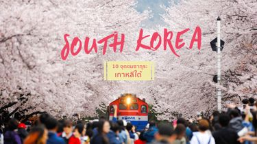 10 จุด ชมดอกซากุระบาน ที่ เกาหลี ฟินกันตลอดทริปฤดูใบไม้ผลิ ทั้งดอกไม้ และโอปป้า