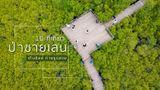 10 ที่เที่ยวป่าชายเลน เดินชิลล์ ถ่ายรูปสวย ศึกษาเส้นทางธรรมชาติ