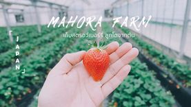 เที่ยวญี่ปุ่น Mahora Farm เก็บสตรอว์เบอร์รี่ ลูกโต เด็ดจากต้น กินสดๆ หวานฉ่ำๆ ที โอคายาม่า