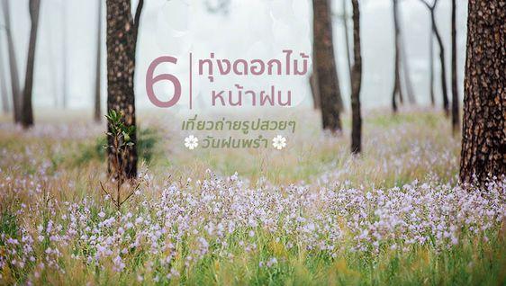 เดินชิล 6 ทุ่งดอกไม้ หน้าฝน ที่เที่ยวถ่ายรูป สวยๆ วันฝนพรำ
