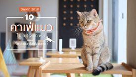 เช็คลิสต์ 10 คาเฟ่แมว กรุงเทพ ที่ทาสแมว ต้องไม่พลาด ! อัพเดท 2018