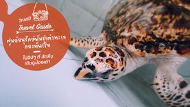 ไปฮิปๆ ที่ สัตหีบ เดินดูน้องเต่า ที่ ศูนย์อนุรักษ์พันธุ์เต่าทะเล กองทัพเรือ