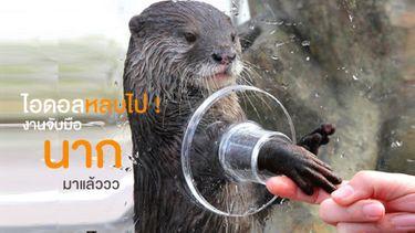ไอดอลหลบไป ! งานจับมือนากมาแล้ว ที่สวนน้ำ ซีพาราไดซ์ โยโกฮาม่า