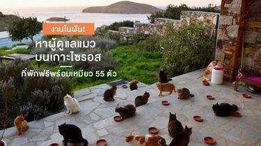 บ้านพี่ขาดคนเลี้ยงแมว... กรีซ ประกาศหาผู้ดูแลแมวบนเกาะไซรอส ที่พักฟรีพร้อมเหมียว 55 ตัว