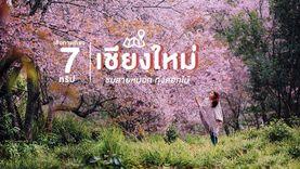 7 ทริป เส้นทางเที่ยว เชียงใหม่ ชมสายหมอก ทุ่งดอกไม้ ที่จะทำให้หลงรัก