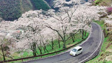 ขับรถเที่ยวญี่ปุ่น แนะนำการเช่ารถขับที่ญี่ปุ่น เช่าที่ไหนได้บ้าง?