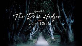 อุโมงค์ต้นไม้ The Dark Hedges ไอร์แลนด์ สวยแต่ลึกลับ