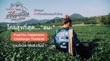 """เที่ยวเมืองรอง ใครสุขที่สุด...""""ชนะ"""" TrueYou Happiness Challenge Thailand อยากให้ใครได้ไปต่อ ขอเสียงโหวตด้วยยย"""