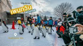 คาวาอี้ ! เพนกวิน พาเหรด สวนสัตว์ Asahiyama Zoo ฮอกไกโด เที่ยวฮอกไกโด หน้าหนาว ฟินสุดๆ