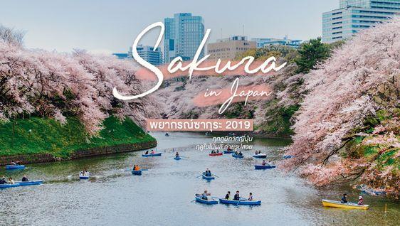อัพเดตล่าสุด! พยากรณ์ซากุระ ญี่ปุ่น 2019 เที่ยวฤดูใบไม้ผลิ ถ่ายรูปสวย เช็คลิสต์เลย