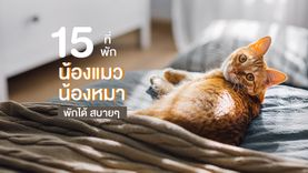 15 โรงแรม หมา แมว พักได้ ชิลสบายๆ ทั้งเจ้าของยันน้องหมา