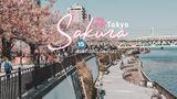 15 จุดชมซากุระ ในโตเกียว ที่สวยที่สุด พร้อมการเดินทางไปเที่ยว