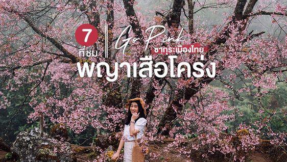 7 ที่ ชมพญาเสือโคร่ง ซากุระเมืองไทย บานสะพรั่งสีชมพู