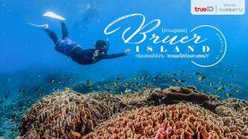 ทริปปล่อยใจไปกับ สวรรค์ใต้ท้องทะเลพม่า เกาะบรูเออร์ - Bruer Island
