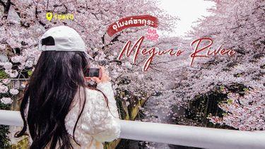 เที่ยวโตเกียว อุโมงค์ซากุระ แม่น้ำเมกุโระ - Meguro River ซากุระสวย ริมสองฝั่งคลอง !