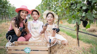 ไร่องุ่นไวน์กราน-มอนเต้ มอบประสบการณ์สุดพิเศษ ต้อนรับเทศกาลเก็บเกี่ยวประจำปี Harvest Festival 2019