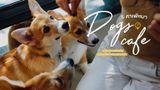 5 คาเฟ่หมา ร้านกาแฟ ในกรุงเทพ นั่งชิล ฟัดน้องหมาสุดน่ารัก ห้ามพลาด