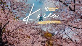 10 จุดชมซากุระ เกาหลีใต้ ฟินกันตลอดทริปฤดูใบไม้ผลิ ทั้งดอกไม้ และโอปป้า