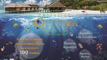 EastVille Aquatica World ที่สุดของการจัดแสดงสัตว์น้ำสายพันธุ์สวยงาม ที่ เซ็นทรัลเฟสติวัล อีสต์วิลล์