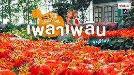 เที่ยวทุ่งดอกไม้ เพลินๆ ที่ เพลาเพลิน บุรีรัมย์ กระบองเพชร ดอกไม้เมืองหนาว นานาพันธุ์