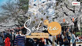 วันนี้บานแล้วนะ! พาเดินชมดอกซากุระ สวนอุเอโนะ โตเกียว 2019 อัพเดตล่าสุด ต้องดู!