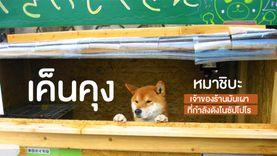 รับอะไรดีฮัฟ? เค็นคุง หมาชิบะ เจ้าของร้านมันเผาที่กำลังดังในซัปโปโร