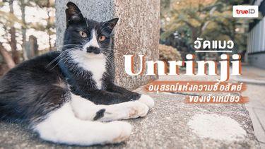วัดแมว Unrinji ประเทศญี่ปุ่น อนุสรณ์แห่งความซื่อสัตย์ของเจ้าเหมียว