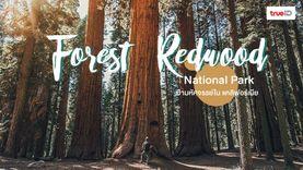 ที่เที่ยวอเมริกา Forest Redwood National Park ป่าสน สูงกว่า 100 เมตร ป่ามหัศจรรย์ใน แคลิฟอร์เนีย