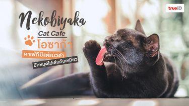 คาเฟ่แมวดำ Nekobiyaka Cat Cafe ที่โอซาก้า มาเล่นกันเถอะ !
