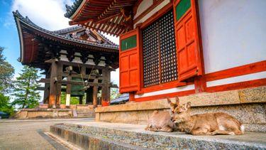 วิกฤติ ! กวางนารา ตายเพราะกินถุงพลาสติกมากขึ้น ญี่ปุ่นวอนนักท่องเที่ยวให้อาหารอย่างถูกวิธี