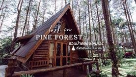 ที่พักเชียงใหม่ ในป่าสน สวนป่าดอยบ่อหลวง ถ่ายรูปสวย เหมือนไปเที่ยวเมืองนอก 🌲