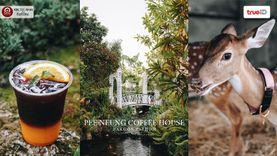 คาเฟ่นครปฐม PEE NEUNG Coffee House คาเฟ่มีกวางออกมา🦌 กรีนๆ ที่ ศาลายา