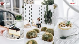 คาเฟ่พัทยา มินิมอล Breeze Box Cafe x Cactus 🌵 คาเฟ่สีขาว ถ่ายรูปสวยกับกระบองเพชร